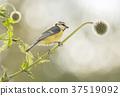 喙 鸟嘴 鸟儿 37519092