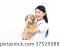여성, 여자, 애완동물 37520088