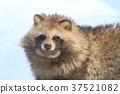 動物 哺乳動物 家畜 37521082