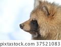 動物 哺乳動物 家畜 37521083