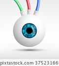 眼睛 目光 人類 37523166