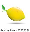 lemon, vector, background 37523239