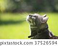 cat, pussy, animal 37526594