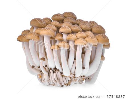 resh brown shimeji mushroom, beech mushrooms  37548887