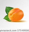 vector, apricot, 3D 37549008