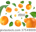 Flying apricot. Realistic 3D Vector apricots 37549009