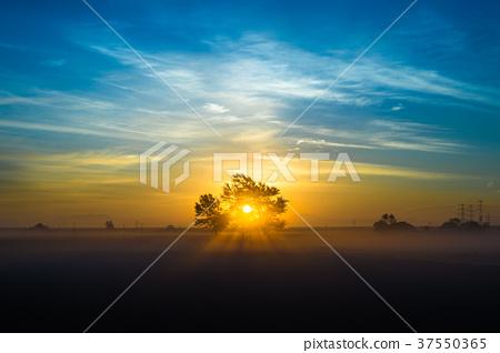 Sunrise 37550365