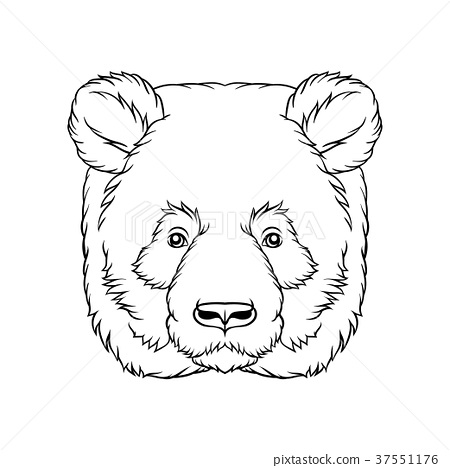 Black and white sketch of panda bears head, face 37551176