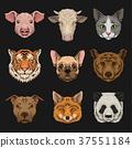 สัตว์,สัตว์ต่างๆ,หัว 37551184