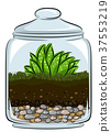 Botany Terrarium Illustration 37553219
