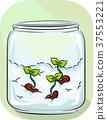 Cotton Germination Sprouts Illustration 37553221