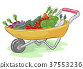 Wheelbarrow Harvest Illustration 37553236