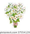 櫻桃 開花 花束 37554129
