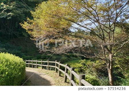 Iwami Ginzan長廊 37554236