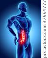 ความเจ็บปวด,เจ็บปวด,กระดูกสันหลัง 37554777