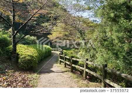 Iwami Ginzan長廊 37555072
