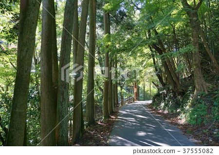 Iwami Ginzan長廊 37555082