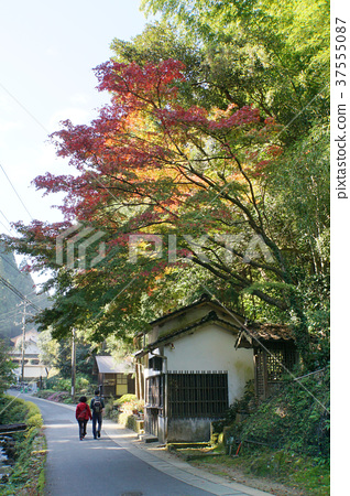 Iwami Ginzan長廊 37555087