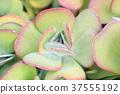 자연, 식물, 선인장 37555192