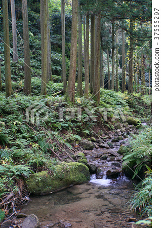 Iwami Ginzan長廊 37555297
