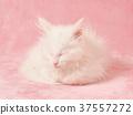ลูกแมว,แมว,เด็ก 37557272