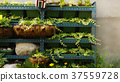 식물, 화분, 정원 37559728