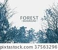 Wild forest background 37563296
