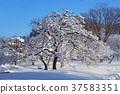 snowy, fallen snow, tree 37583351