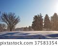 tree, snowy, fallen snow 37583354