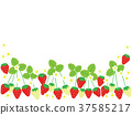 strawberries, strawberry, fruit 37585217