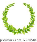 Wreath of fresh green leaves 37586586