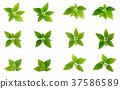 green realistis leaf set 37586589
