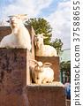 야마나시 현 고후시 遊亀 공원 부속 동물원 염소 37588655