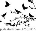 鸽子 侧影 剪影 37588815