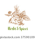 herb, spice, vector 37590109
