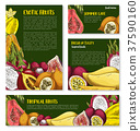 Vector templates of tropical exotic fruits 37590160