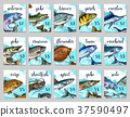 鱼 市场 价格 37590497