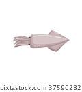 魷魚 烏賊 墨魚 37596282