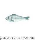海鲜 鱼 海 37596284