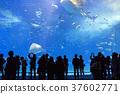 魚 水族館 水箱 37602771