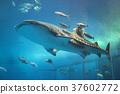 고래상어, 물고기, 생선 37602772
