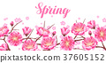 Spring banner with sakura or cherry blossom 37605152