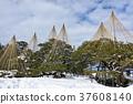 특별 명승 겐로쿠엔 겨울 눈 매달아 37608140