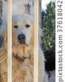 dog with sad eyes behind 37618042