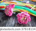Petal Pink Lotus For Pray 37618134