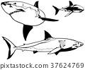 鯊魚 魚 向量 37624769