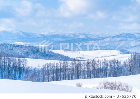 """""""北海道""""美瑛的丘陵和雪原的地面 37625770"""