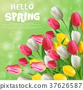 Hello spring with tulip flowers 37626587