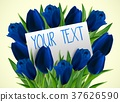 Blue tulip flowers with paper card 37626590