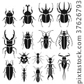 Insect icons set. Vector Illustrations. 37626793